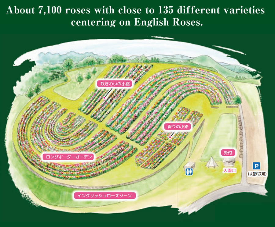 About 6,300 roses with close to 100 different varieties centering on English Roses.