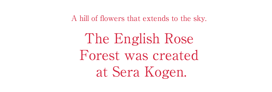 A hill of flowers that extends to the sky.The English Rose Forest was created at Sera Kogen.