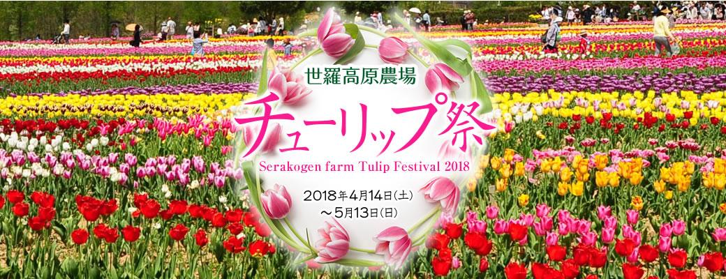 世羅高原農場 チューリップ祭2018 Serakogen Farm Festival 2018 2018.4.14-5.13