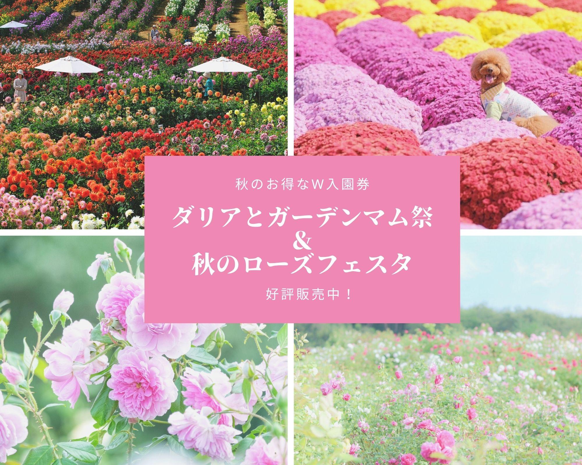 2021ダリアとガーデンマム祭&秋のローズフェスタ【秋のW入園券発売決定!】