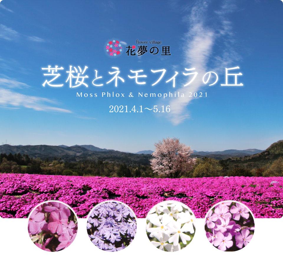 芝桜とネモフィラの丘 2021年4月1日〜5月16日